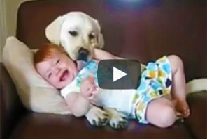 Humor | Video - babies laughing at dogs