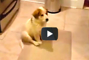 Dog Humor | 9 seconds + 1 puppy = 1 human laugh