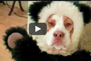 Post image for Dog Humor | excellent dog shaming clip