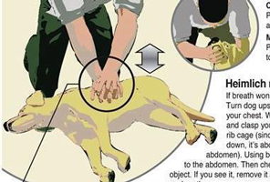 Post image for Dog Wellness | saving your dog in an emergency