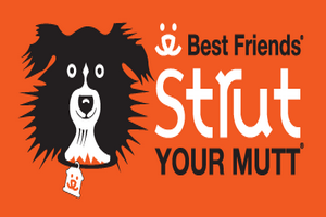 Barker Event | Strut Your Mutt - walk for homeless pets