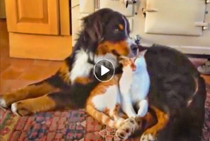 Dogs-many-humorous-persistent-efforts-to-be-friends-with-cats