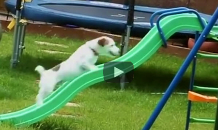 Funny Dog Video | dogs failing doing dog stuff